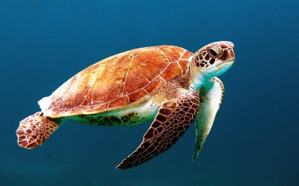 Costa Rican Sea Turtle Earth Watch